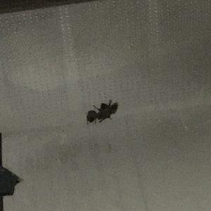 軒先のコウモリ